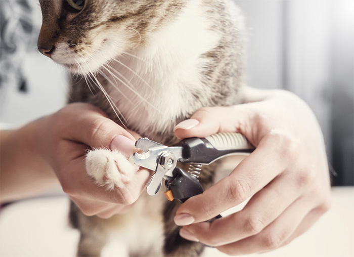 vet tech clipping cat claws