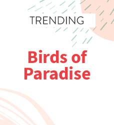 Shop our collection of birds of paradise print scrubs